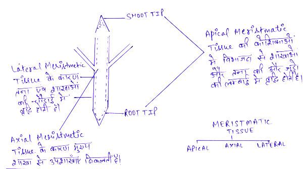 http://www.iasplanner.com/civilservices/images/Plant-tissue-root-tip.jpg
