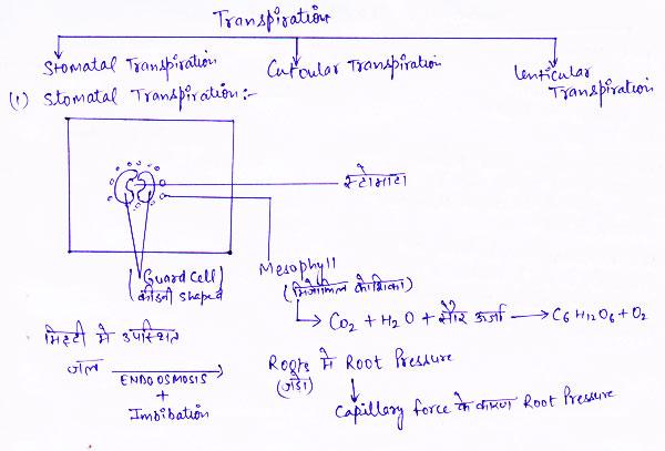 http://www.iasplanner.com/civilservices/images/Transpiration-stomata.jpg