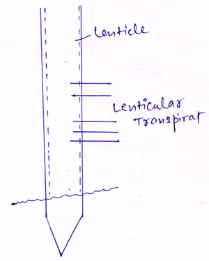 http://www.iasplanner.com/civilservices/images/lenticular-transpiration.jpg