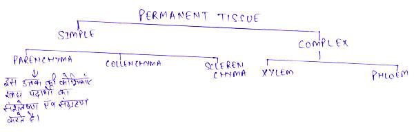 http://www.iasplanner.com/civilservices/images/permanent-tissue.jpg