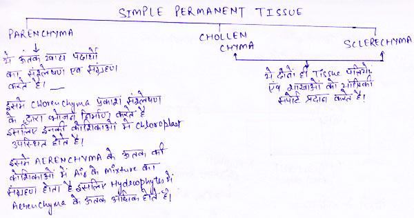 http://www.iasplanner.com/civilservices/images/simple-permanent-tissue.jpg